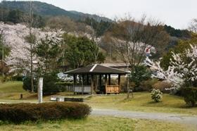 桜14.JPG